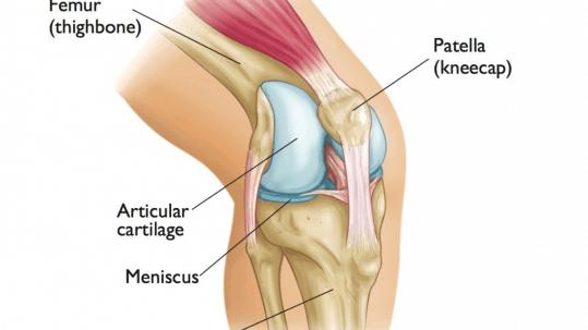 Confira as respostas para as principais duvidas sobre cartilagem do joelho