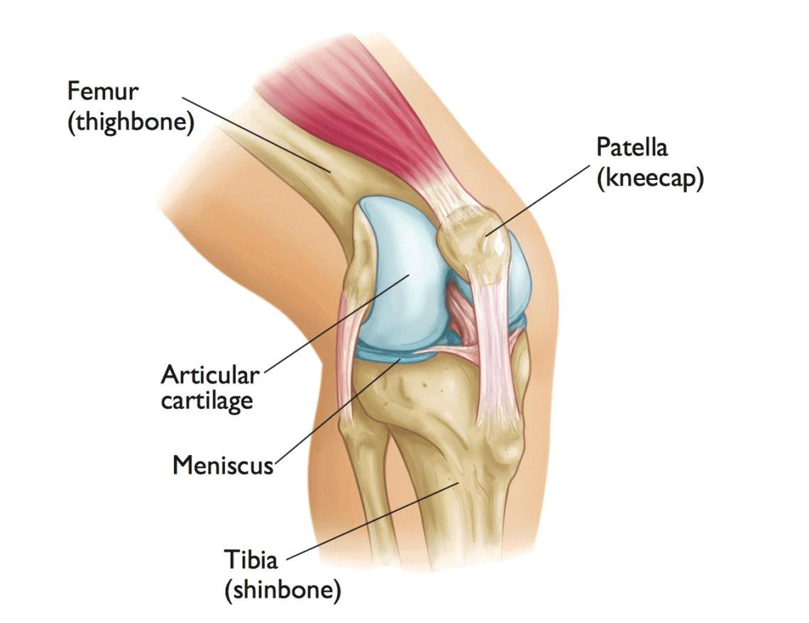 Confira as respostas para as principais dúvidas sobre cartilagem do joelho